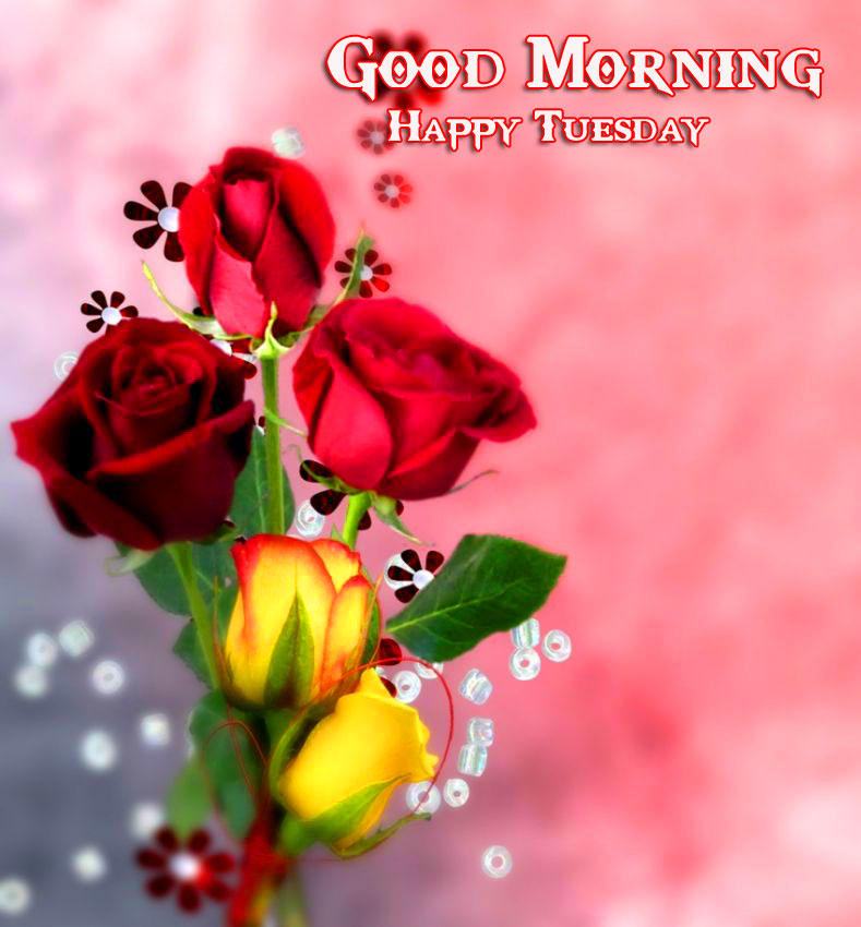 Good Morning Happy Tuesday Roses Picture HD