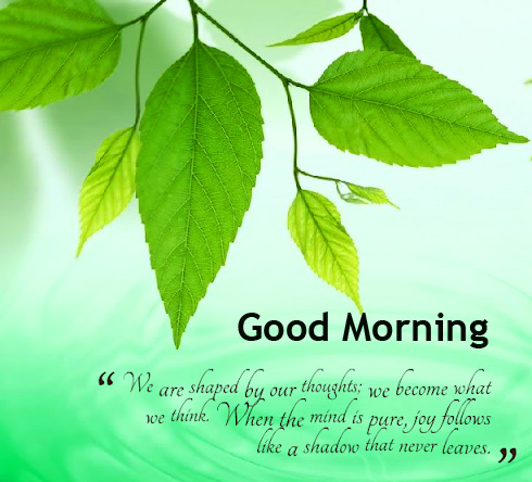 Good Morning Leaf Quotes HD Pic