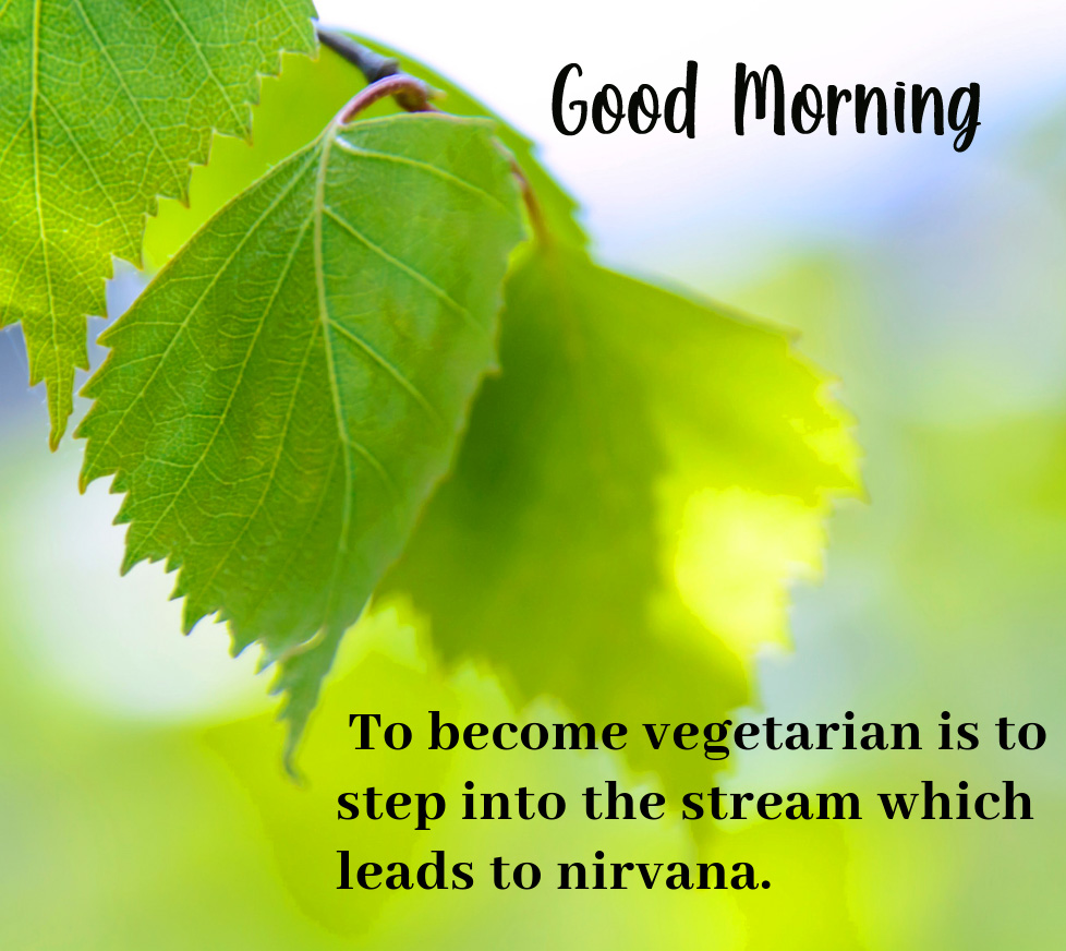 Good Morning Leaf Quotes Image