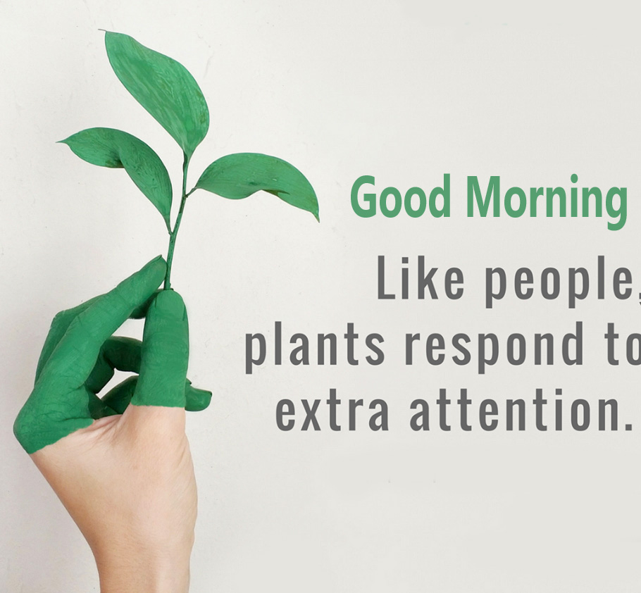Good Morning Leaf Quotes Pic HD