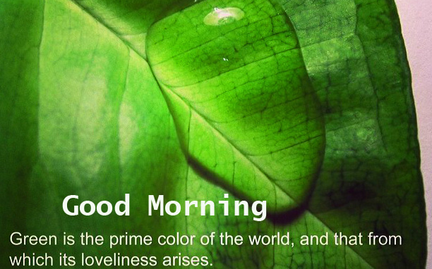 Good Morning Lovely Leaf Quotes Wallpaper