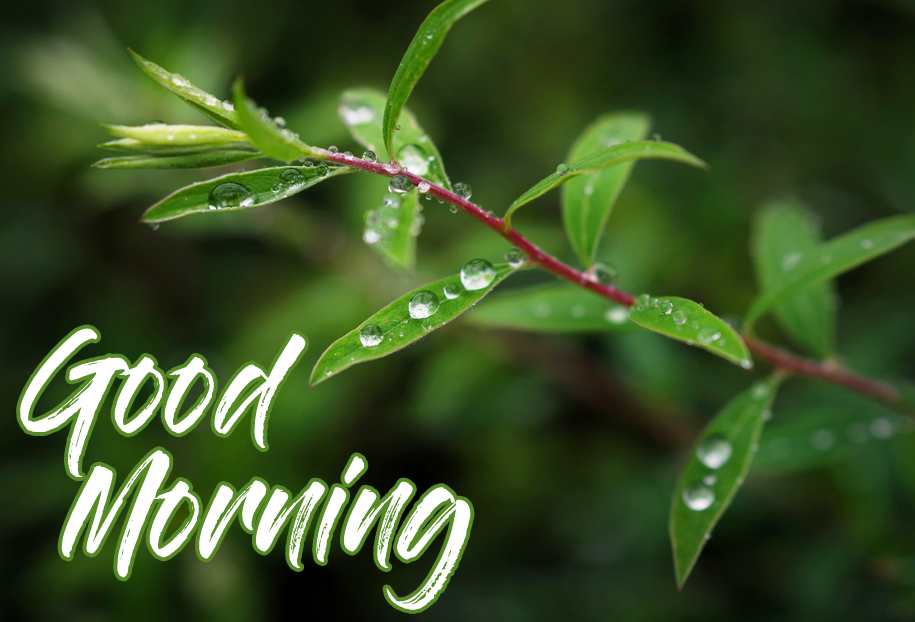 Good Morning Rainy HD Wallpaper