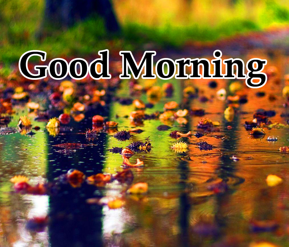 Good Morning Rainy Picture and Photo