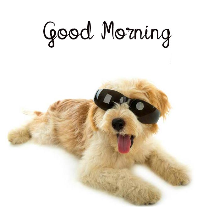 Good Morning with Smart and Funny Dog