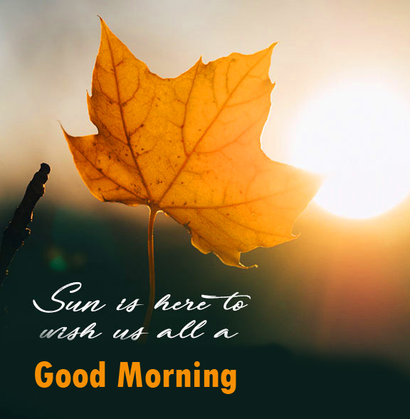 Good Morning with Sun Leaf Quotes
