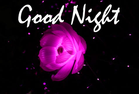 HD Shining Flower Good Night Picture
