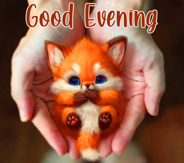 Kitten Cute in Hands with Good Evening Wish