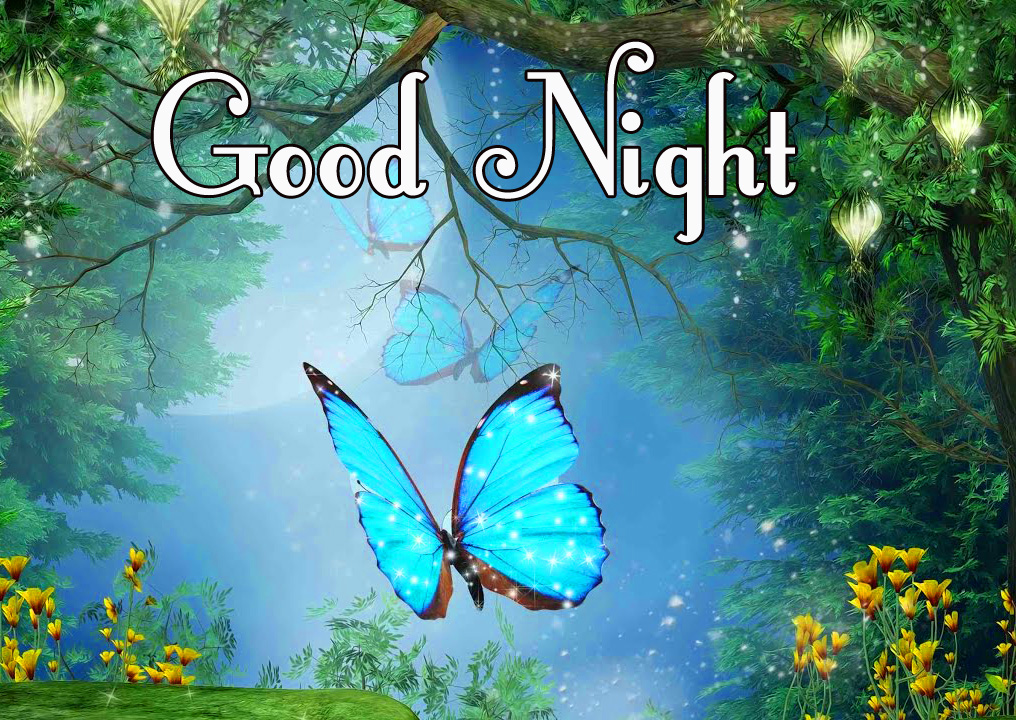 Latest Butterfly and Forest Scenery with Good Night Wish
