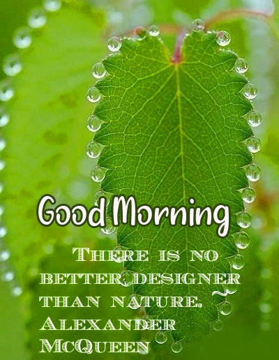 Latest Leaf Quotes Good Morning Image