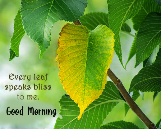Leaf Good Morning Quotes Wallpaper