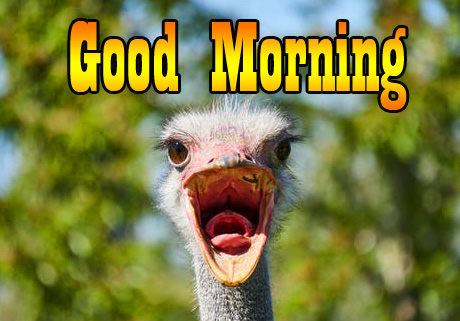 Lovely and Funny Good Morning Image