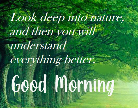 Nature Leaf Quotes Good Morning Wallpaper