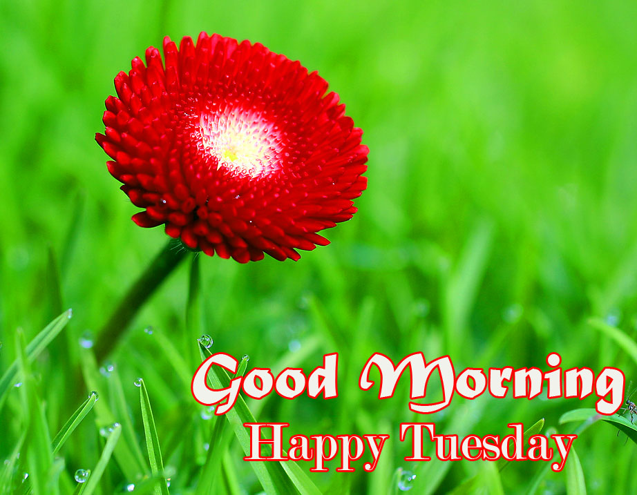 Nature Red Flower Good Morning Happy Tuesday Image