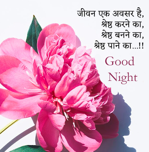Pink Flower with Good Night Wish and Hindi Quotes
