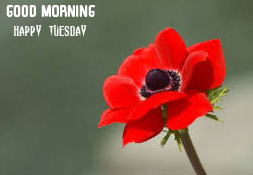 Red Flower Good Morning Happy Tuesday Photo