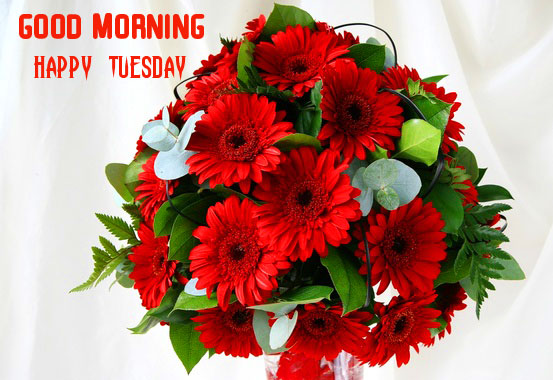 Red Flowers Bouquet with Good Morning Happy Tuesday Wish