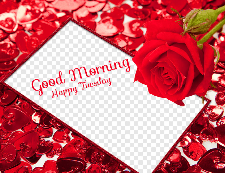 Red Hearts and Red Rose Good Morning Happy Tuesday Wallpaper