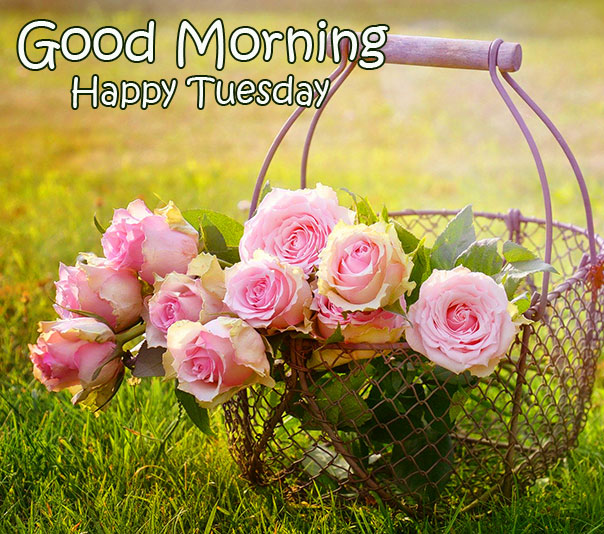 Roses in Basket Good Morning Happy Tuesday Image