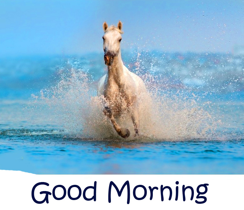 Sea Horse Good Morning Picture HD