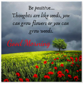 Seeds Positive Quotes Good Morning Image