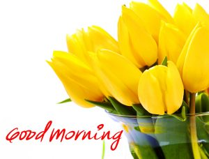 Yellow Tulips Good Morning Picture