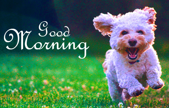 Adorable Puppy Good Morning Image