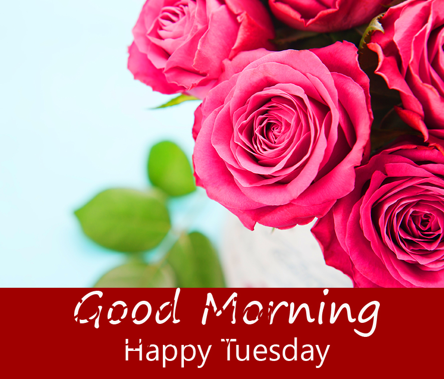 Beautiful Red Roses Good Morning Happy Tuesday Image