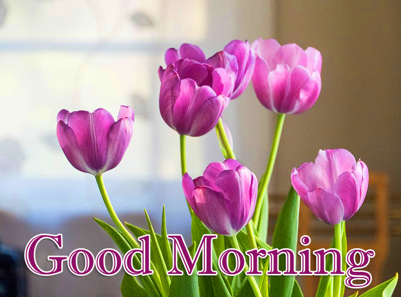 Best Tulips Good Morning Image