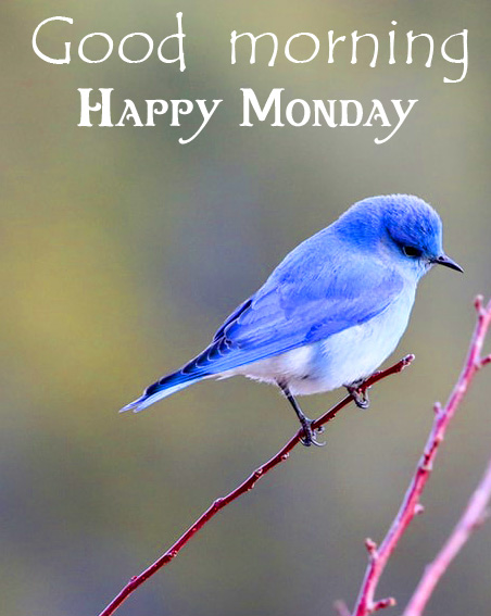 Bird HD Good Morning Happy Monday Wallpaper