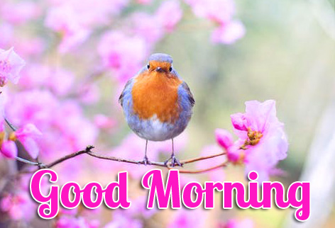 Bird and Flower Good Morning Image