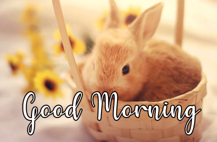 Bunny in Basket with Good Morning Wish