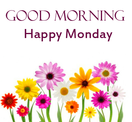 Colorful Flowers HD Good Morning Happy Monday Wallpaper