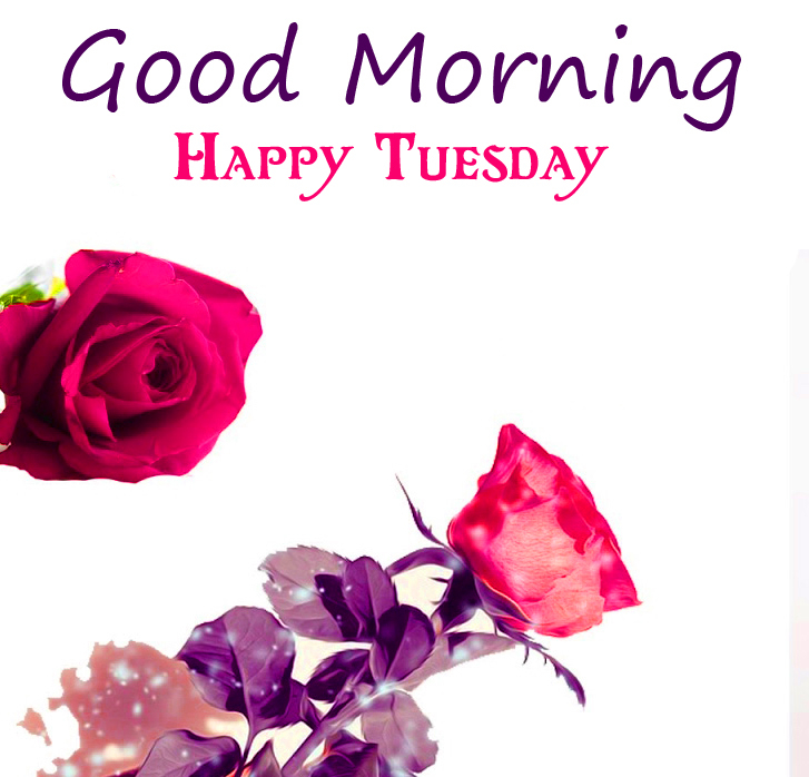 Floral HD Good Morning Happy Tuesday Wallpaper