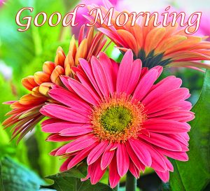 Flower Good Morning Wallpaper