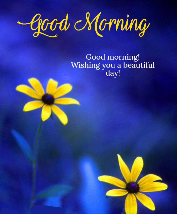 Flower with Beautiful Quote and Good Morning Wish
