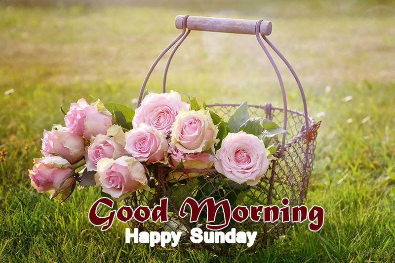 Flowers Basket Good Morning Happy Sunday Picture