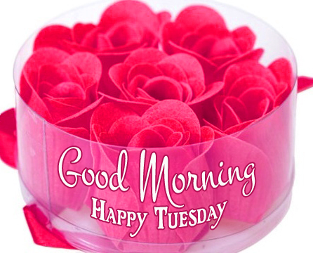 Flowers Good Morning Happy Tuesday Image HD