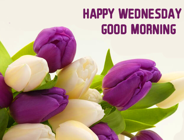Flowers HD Happy Wednesday Good Morning Image