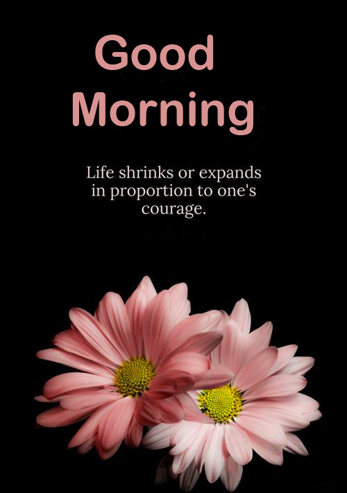 Flowers Life Quote Good Morning HD Picture