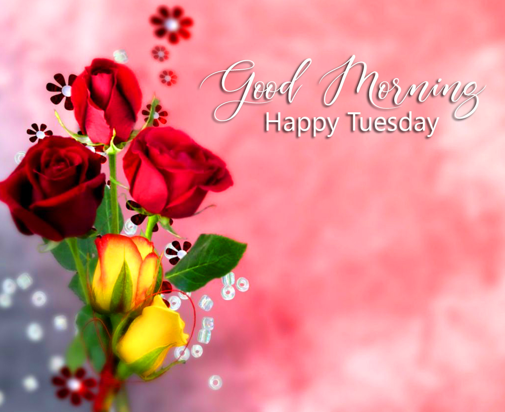 Flowers Rose Good Morning Happy Tuesday Wallpaper