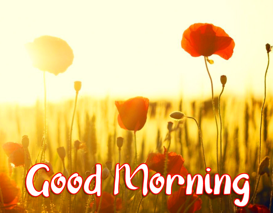 Flowers Sunrise Good Morning Wallpaper