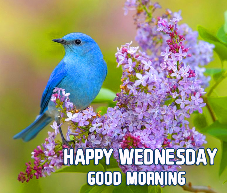 Flowers and Bird Happy Wednesday Good Morning Pic