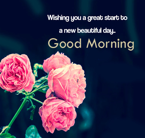 Flowers with Quote and Good Morning Wish