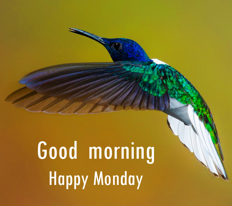 Flying Bird Good Morning Happy Monday Image