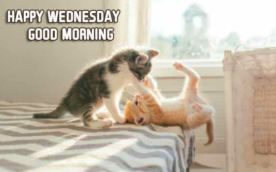 Funny Kittens Happy Wednesday Good Morning Photo