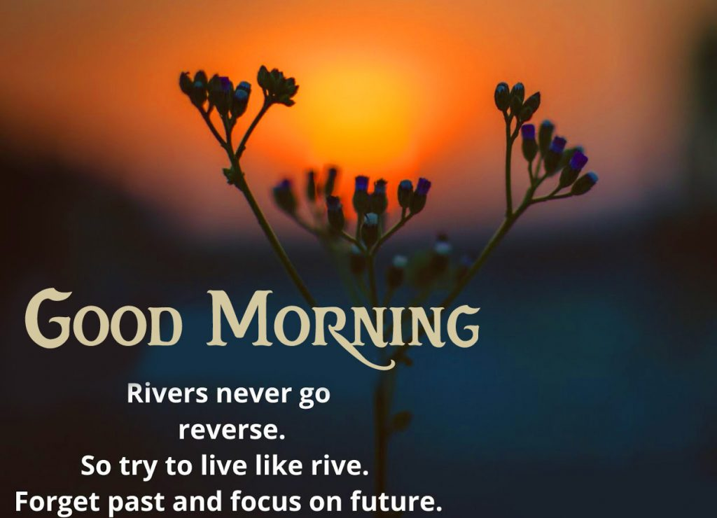 56+ Good Morning Quotes and Images (new photos)