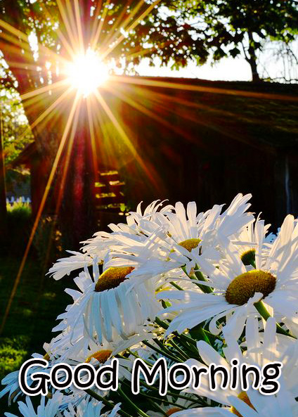 Good Morning Flowers Sunrise Image