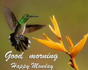 Good Morning Happy Monday Birde and Flower Picture
