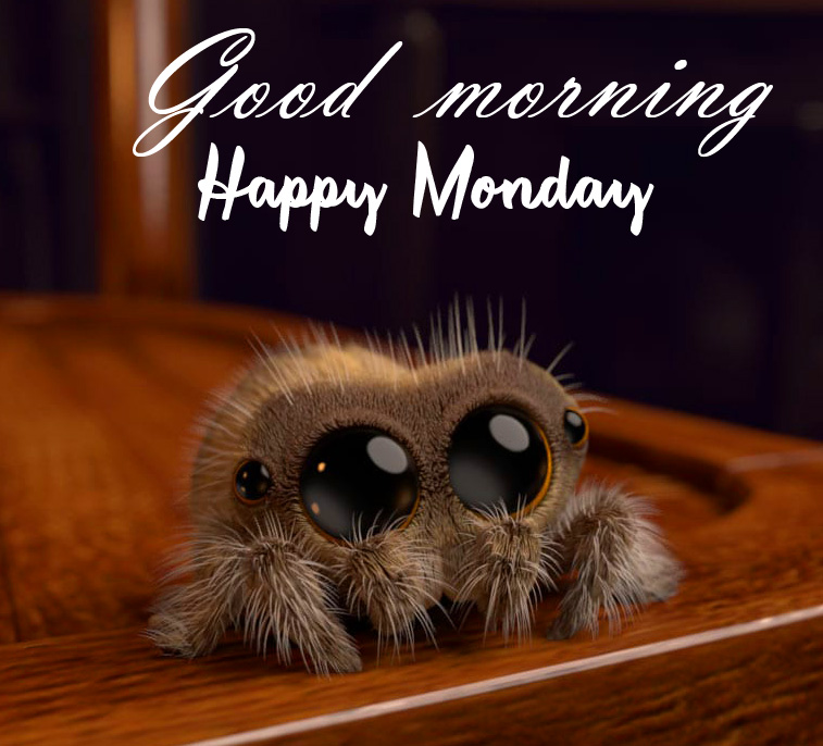Good Morning Happy Monday Cute Creature Pic