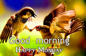 Good Morning Happy Monday Sweet Birds Picture